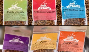 Bug Bistro Review: flavoured mealworms and crickets