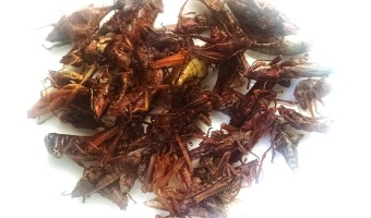 Where to Buy Chapulines