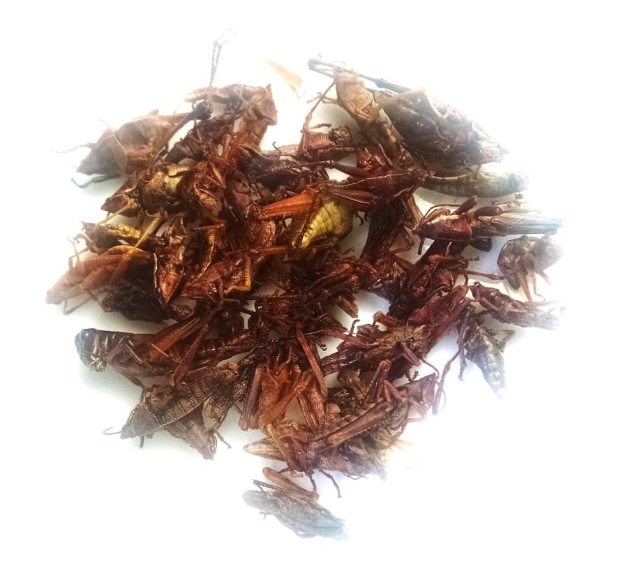 Bug-Vivant-buy-chapulines